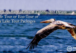 Orissa wildlife tour Packages